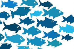 leadership-1 (fish)
